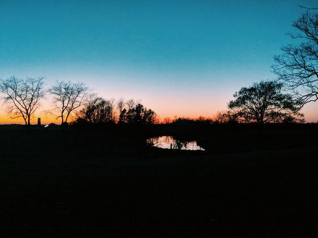 Sunset Tree Silhouette Pixelated Sky