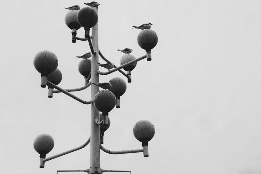 01.2008 Meriken Park Kobe Japan Photowalk Black And White Seagull Post Winter Birds