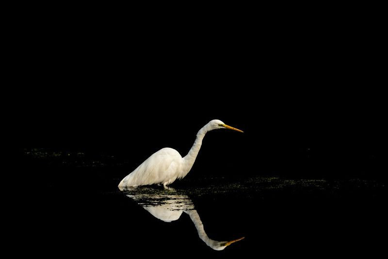 Side view of a bird in water at night