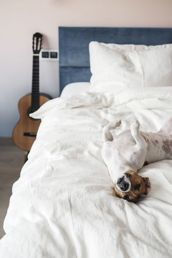 View of an animal on bed