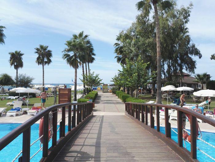 Palm Tree Beach Vacations