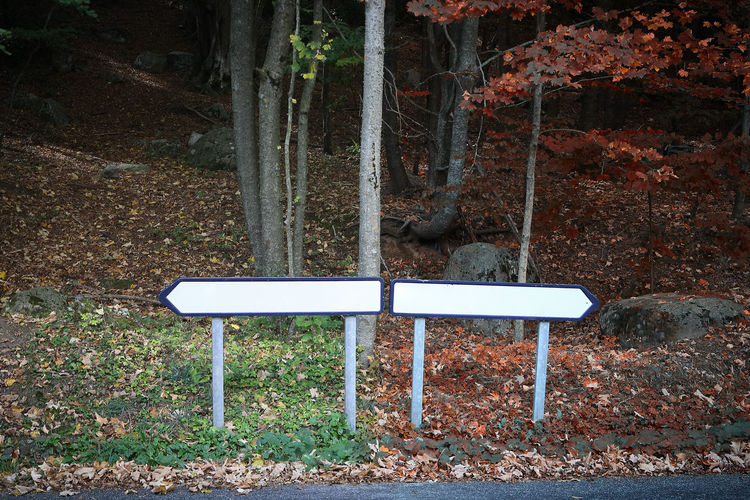 Choice Copy Space Decisions Path Road Sign Bad Editable Election Empty Forest Good Improper Outdoors Personal Perspective Proper Right Road Sign Sin  Way Wrong