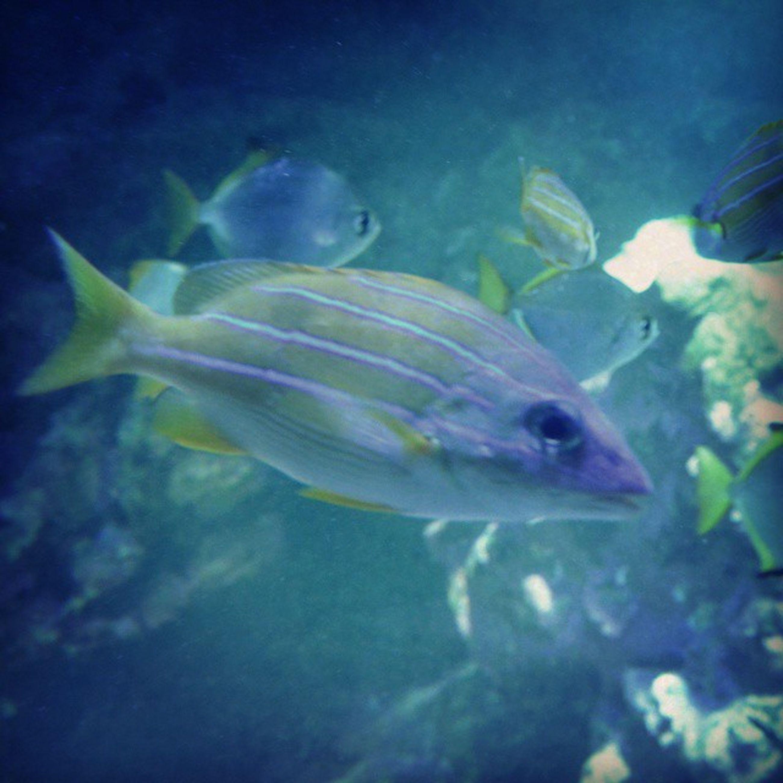 animal themes, underwater, animals in the wild, swimming, fish, wildlife, sea life, water, undersea, one animal, aquarium, sea, nature, close-up, beauty in nature, zoology, transparent, indoors, aquatic, fish tank