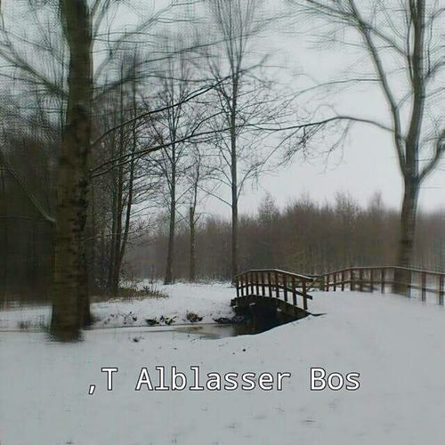 Tree Bare Tree Reflection Cold Day. Bridge Winter Snow Branch Outdoors No People Nature Beauty In Nature Made In Holland Made By Noesie Nature Outdoors No People Water Tranquility Lake Cold Temperature Tree Trunk Winter Branch Snow Beauty In Nature Day Sky