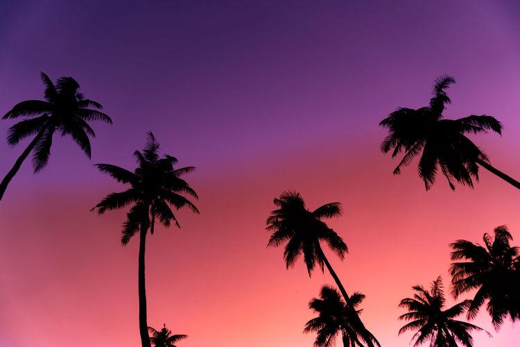 Sun Magenta Coconut Trees Backgrounds