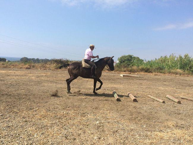 Equestrian competition Cancelada