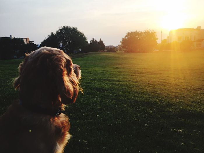 EyeEm Selects Dog Pets One Animal Domestic Animals Animal Themes Tree Grass Mammal Sunset Sunlight Nature Field Sky Outdoors Day No People Beauty In Nature Close-up EyeEm Best Shots The Week On EyeEm