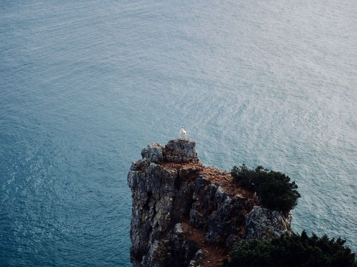 High angle view of bird on rock by sea