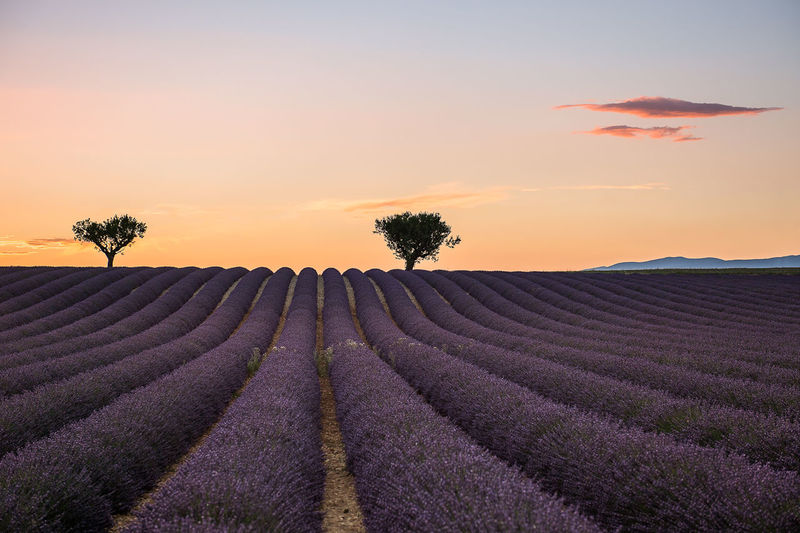 Provence Sunset Landscape Nature Lavanda