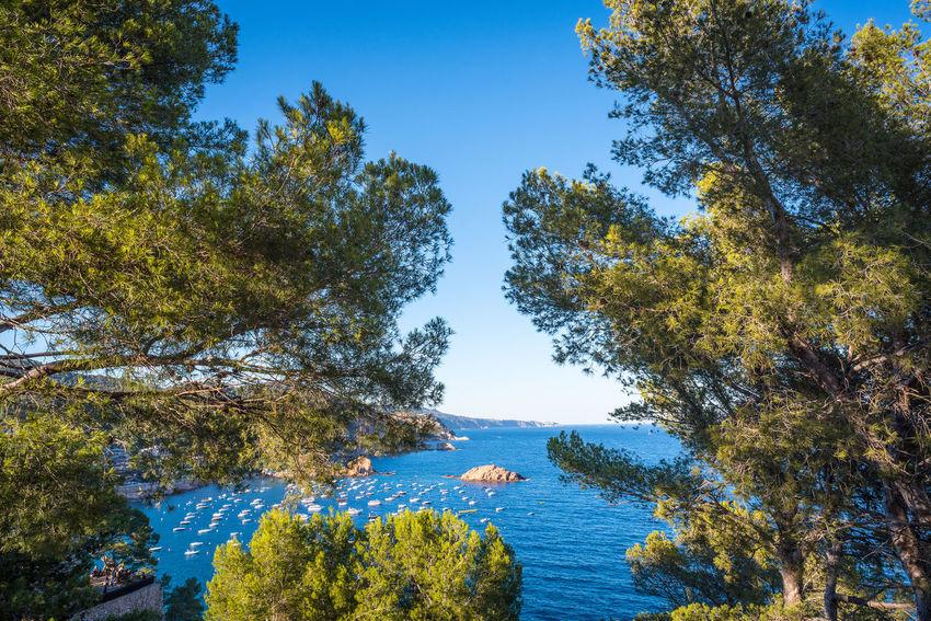 Cloud - Sky Seaside Beauty In Nature Nature Tree Outdoors Sky Day No People Nikonphotography Mediterranean  EyeEm Best Shots Landscape Beauty Mediterranean Sea
