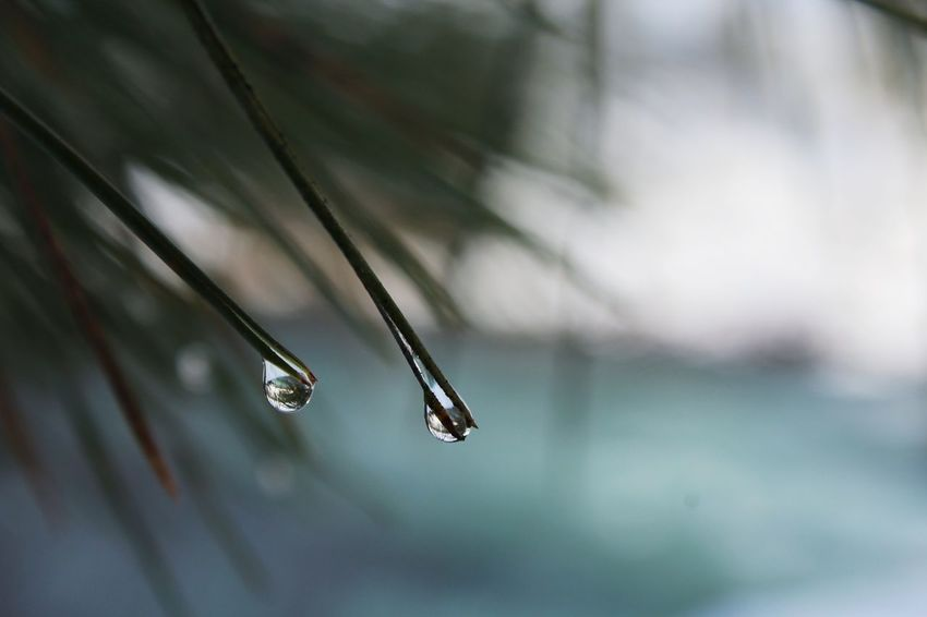 Close-up Outdoors Water Nature Drop Waterdroplets