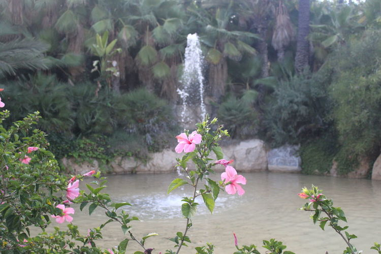The flower Beauty In Nature Bucolic Close-up Day Flower Flower Head Font Fontain Fountain Fragility Freshness Growth Horizontal Lovely Nature No People Outdoors Pink Color Plant Source Tree Water Water Jet