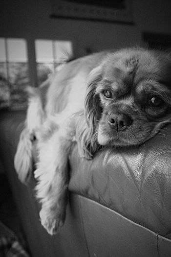 Relaxed Dog Looking Away