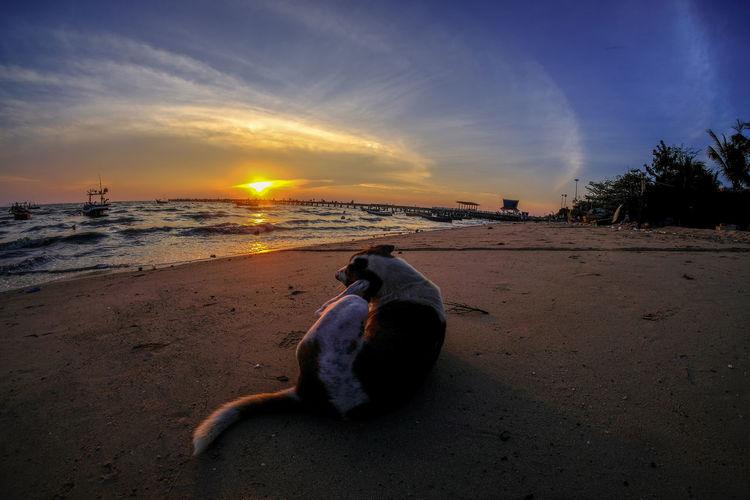 dog on beach at