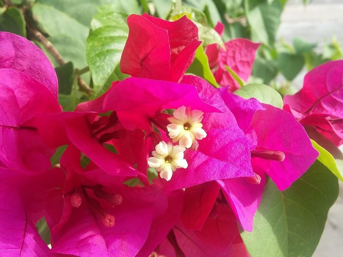 Plants 🌱 Nofilternoedit Nofilter Nofilter#noedit Pink Pink Flower Sensibility Tree Flower Head Flowers Flower Petal Pink Color Nature Fragility Flower Head Beauty In Nature Red Freshness Leaf Plant Close-up Day Outdoors No People