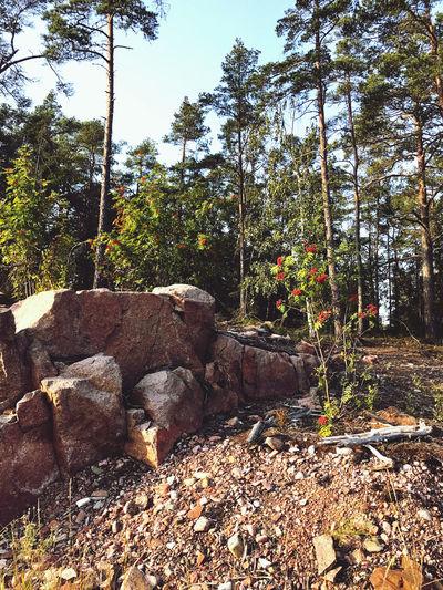 Plants growing on rocks in forest