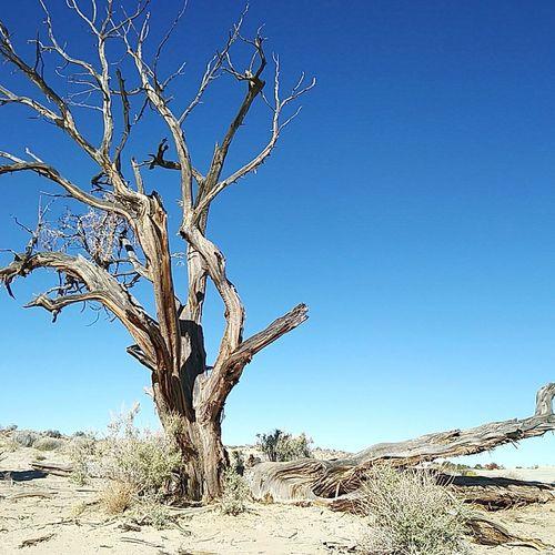 SaltTree Tree
