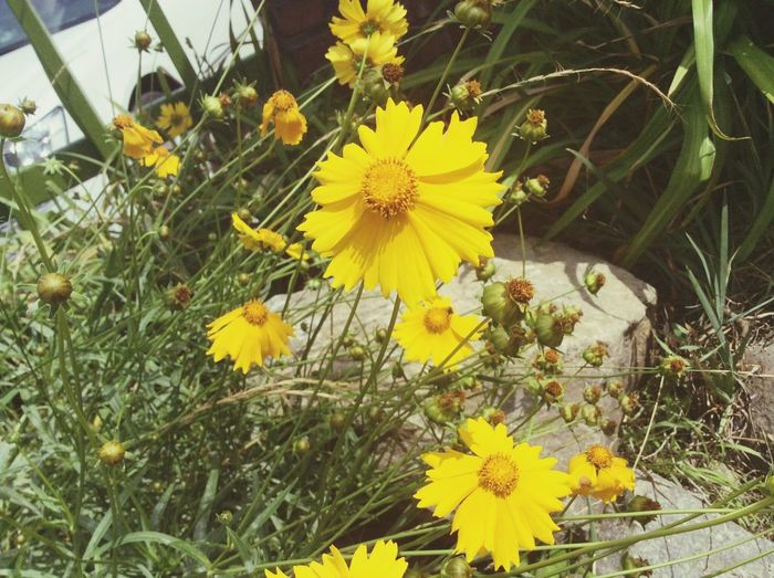우리학교 후문창살로 슬그머니 고개내민꽃들