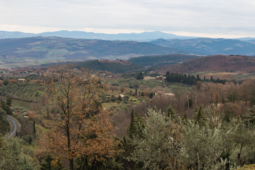 Tuscany Winter Wood Beauty In Nature Countryside Day Growth Italy Landscape Mountain Nature No People Outdoors Rural Scene Scenics Siena Sky Tranquil Scene Tranquility Tree