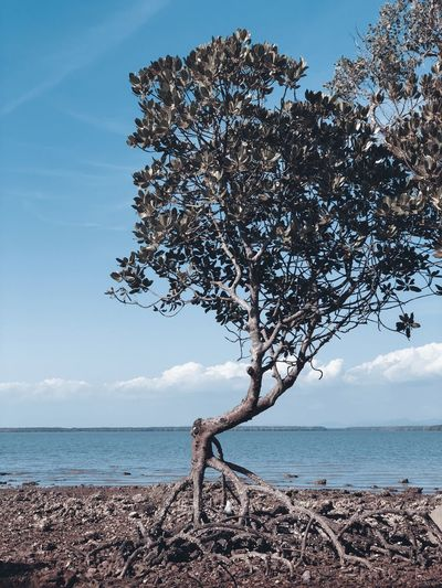 Tree by sea against sky