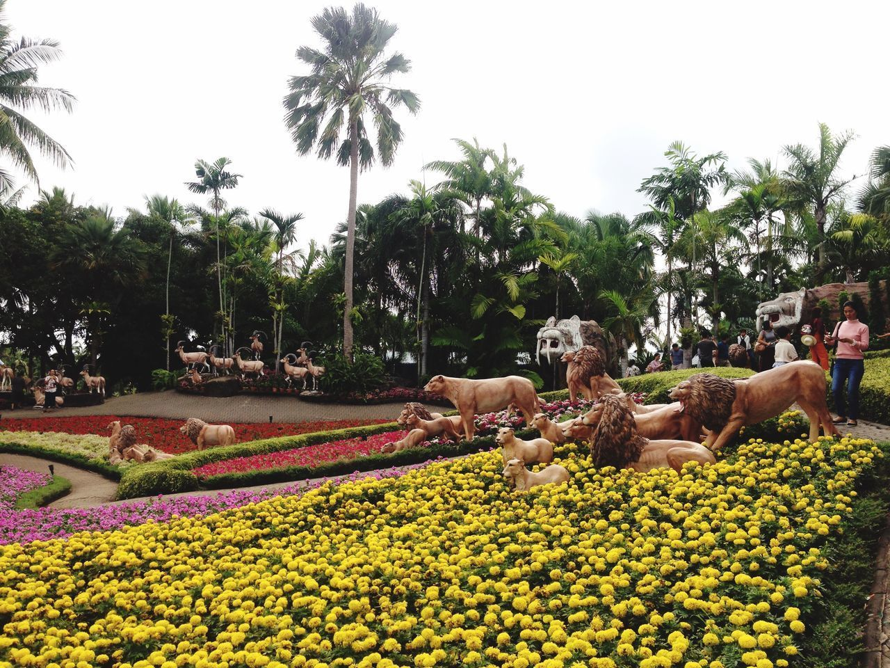 plant, flower, flowering plant, tree, growth, sky, nature, palm tree, tropical climate, yellow, freshness, park, garden, animal themes, mammal, day, beauty in nature, park - man made space, animal, no people, flower head, flowerbed
