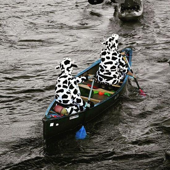"VOYAGE EN IRLANDE - 5 septembre - On aurait dit une execution du 🎼 ""Carnaval des animaux"" 🎼 le long du fleuve Liffey! IRISH TRIP - September 5 - One may have thought that the 🎼 ""Carnival of the Animals"" 🎼 was being played on the Liffey! Ireland Visitireland Irelandinspires Dublin Loves_dublin Discoverdublin Vivosplash Instasplash Colorsplash Colorsplash_of_our_world Loves_colorsplash Co_splash Worldofsplash Splash_mania__ Splashmood Splashing_city Greatcapturesplash Citysplash Love_splash Love_splashcolor Ok_splash Colorsplash_class Exclusive_splash Tv_colorsplash Tgif_colorsplash pocket_colorsplash passion_for_splashing tr_colorsplash total_splash"
