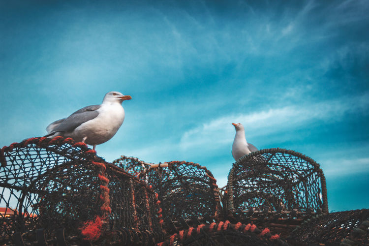 Low angle view of seagulls perching on lobster trap against sky