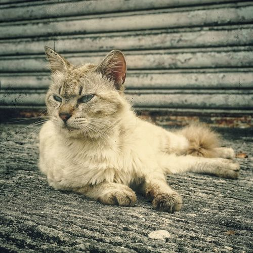 Close-Up Of Cat Relaxing On Street Against Wall