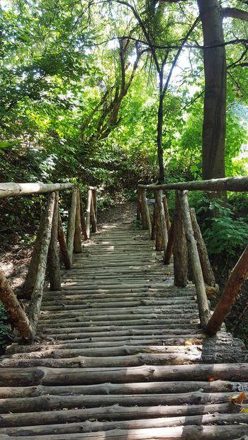 Vitosha Mountain Sofia, Bulgaria Wood Bridge One Way Forest Path Nature Lover