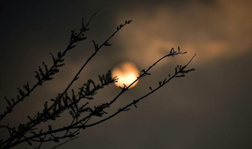 Low angle view of silhouette branch against sky during sunset