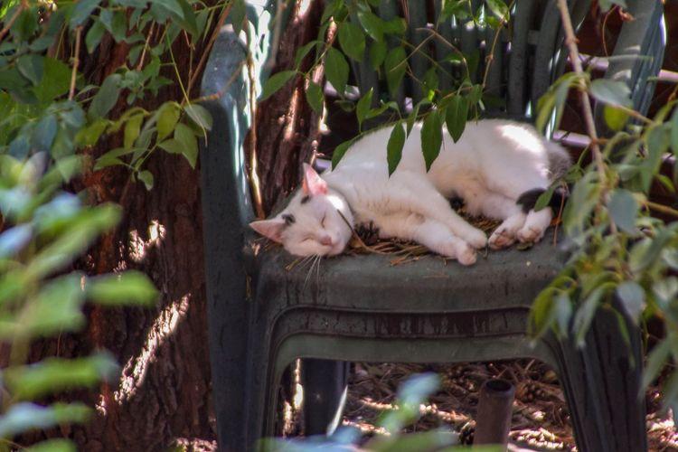 Pets Tree Lying