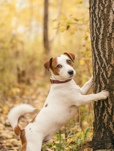 Portrait of dog on tree trunk