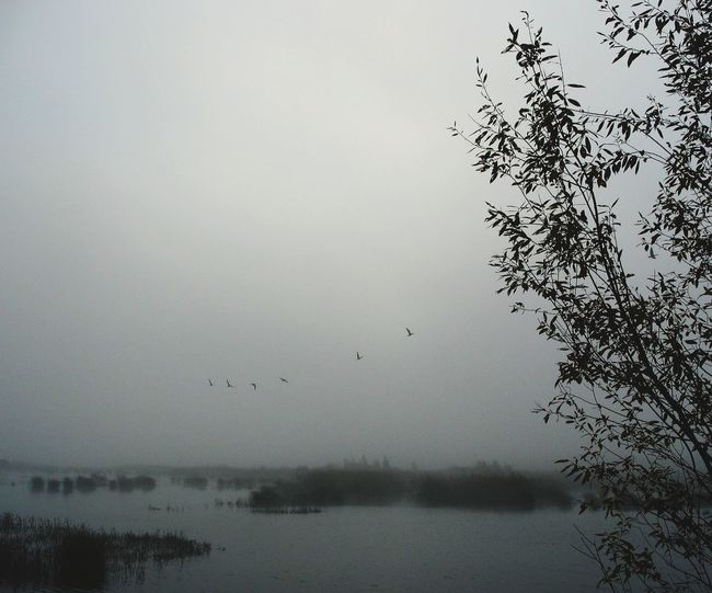 Autumn Bird Flying Tree Water Flock Of Birds Silhouette Spread Wings Reflection Sky Animal Themes Hawk - Bird Animal Migration