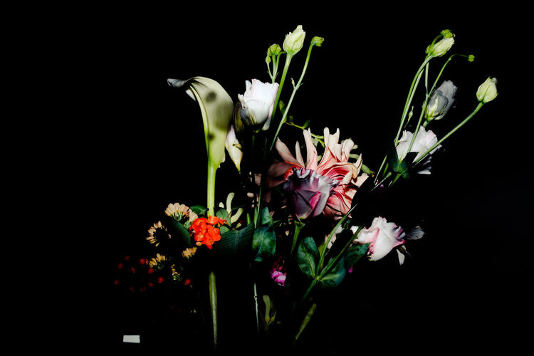 Beauty In Nature Black Background Blossom Bouquet Close-up Flower Flower Head Fragility Freshness Gerbera Daisy Nature Night No People Outdoors Plant