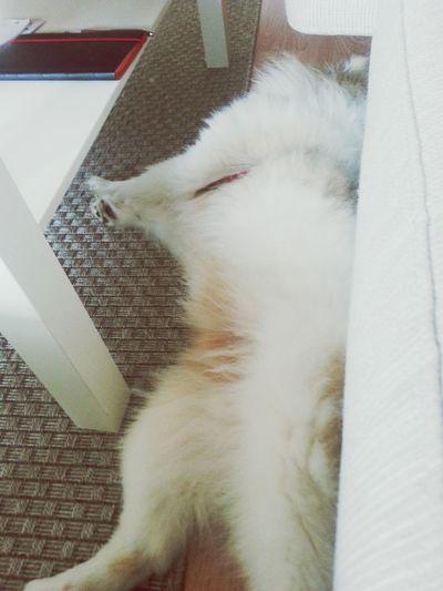 Mittelspitz Sleeping