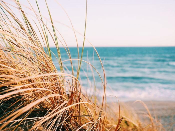 Close-up of dry grass at beach against sky
