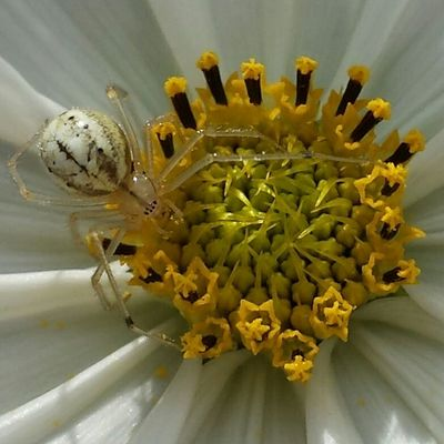Spider Insects  Nature Floral Little Macro Naturephotography Flowerheart Insect Photography Naturewhisperers
