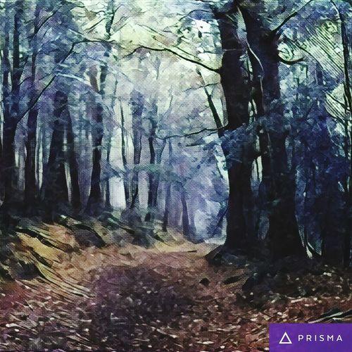 Mist In The Woods Fairytale  Irish Magic Rhapsody In Blue