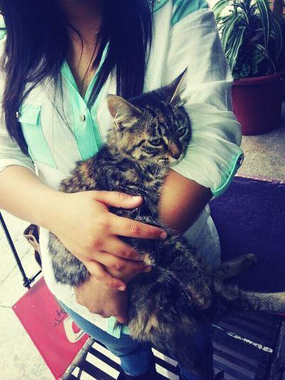 My Cat'rinha