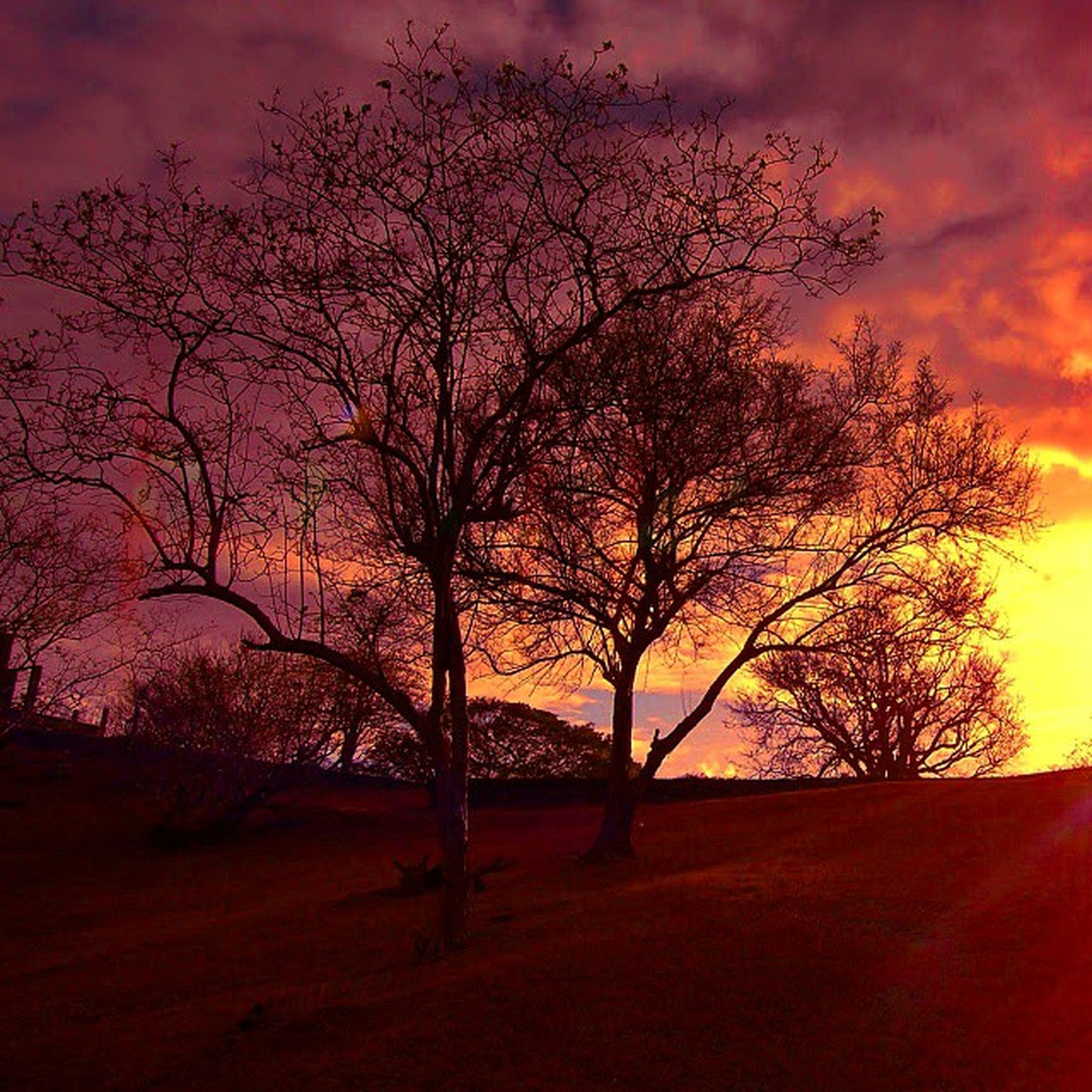 sunset, tree, sky, silhouette, bare tree, orange color, tranquility, cloud - sky, beauty in nature, scenics, tranquil scene, branch, nature, dramatic sky, idyllic, cloud, cloudy, landscape, growth, outdoors