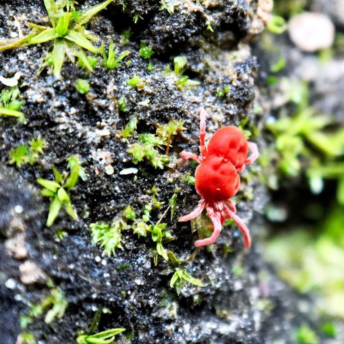 Moss Macro X 20 Red Spider Arachnid Nature Red Beauty In Nature Plant Growing Day Close-up