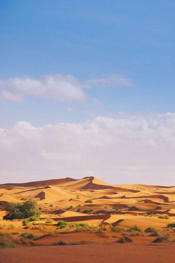 Sahara Desert, Morocco Scenics - Nature Landscape Land Sky Environment Desert Cloud - Sky Tranquil Scene Nature Day Tranquility Horizon Over Land Beauty In Nature Horizon Non-urban Scene Outdoors Sand Grass Plant Semi-arid Climate Arid Climate Prairie Sahara Desert Morocco