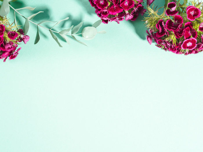 High angle view of pink flowering plant against white background