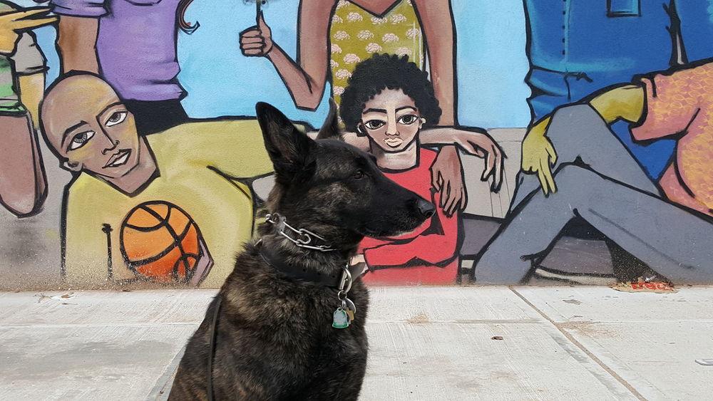 Holding Outdoors Close-up No People Green Streetphotography Street Art Graffiti NYC Photography NYC Street Photography Brooklyn Unity Dog Dog Head Sheperd Dutch Shepherd Mural Mural Art Pets Animal Pet