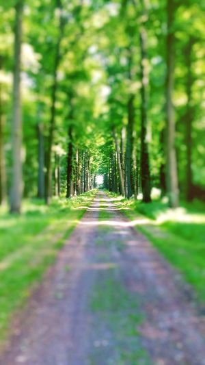 The way is long Way Forest Tranquil Scene Tranquility Walkway Outdoors Green Color Beauty In Nature Nature