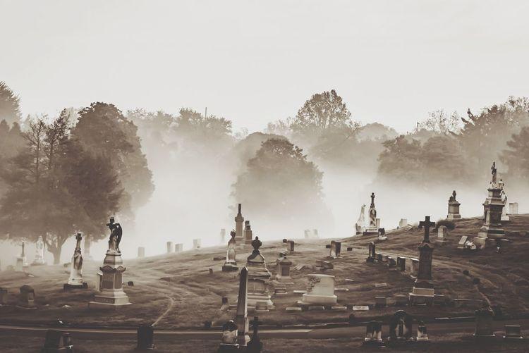 Morning fog in a cemetery