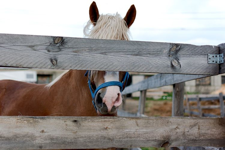 Close-up of horse by wooden fence in barn