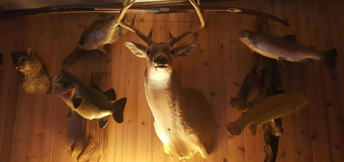 Ranch Home Ranch Life Hunting Season Hunting For Food Cherokee Nation Lake Ten Killer, Oklahoma, Okie Taken EyeEm Gallery Indoors  Tulsa Time Ranch Life Close-up No People Be. Ready. Rethink Things Perspectives On Nature 3XSPUnity 3XSPhotographyUnity