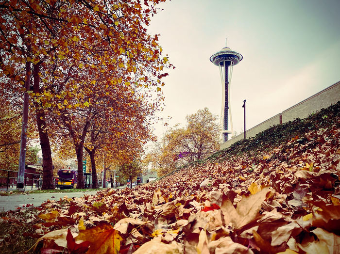 Autumn leaves on street in park