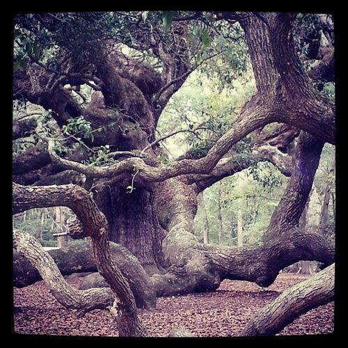 Angel Oak, Charelston, SC